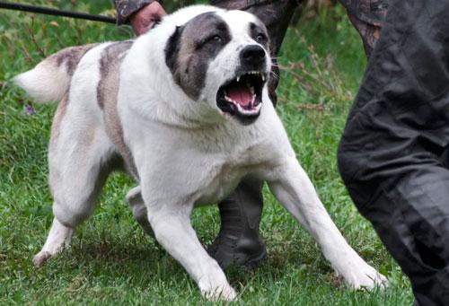 dog-attack-bite